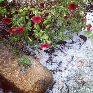 Spring Hail